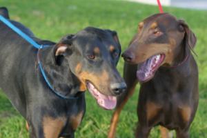 Roscoe and Cleo